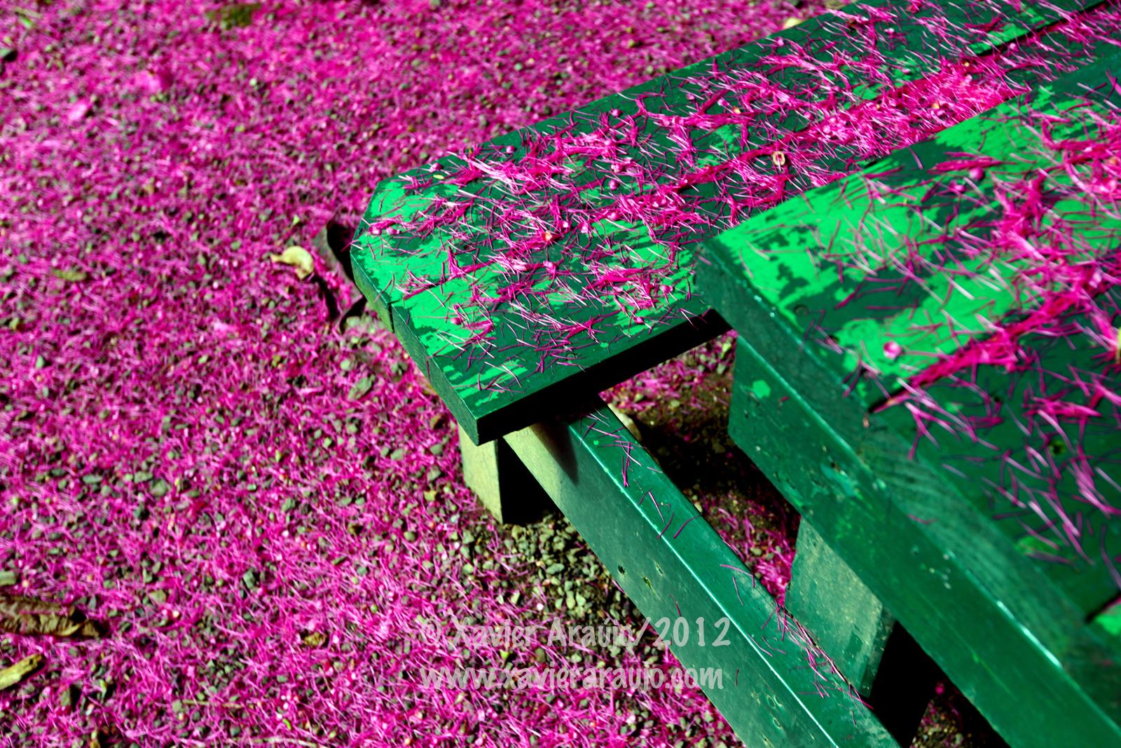 Laneveritaazul for Bodas en el jardin botanico de rio piedras